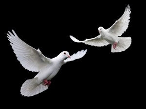 Dove Poem Weddings